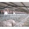 猪场喷雾线,猪场自动下料线,荥阳富源养殖设备厂(机械厂)
