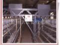 蛋鸡自动化设备 龙门式上料机 全国招商--沧州洪发畜牧机械有限公司