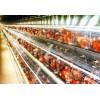 常虹养殖设备厂提供蛋鸡笼