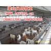 山东波尔山羊多少钱一只山东波尔山羊养殖场