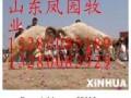 阿合奇县多胎小尾寒羊规模养殖合作社阿合奇县哪里有卖小尾寒羊的
