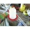养鸡设备,自动料线