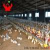肉鸡鸭盘式料线系统 肉种鸡鸭盘式喂料 料线料盘养鸡自动设备