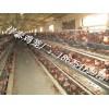 养鸡笼具,鸡笼,三层阶梯蛋鸡笼