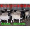 2014年鲁西黄黄牛最新价格山东圣亿牧业