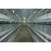 养鸡设备,中州牧业,畜牧养鸡设备