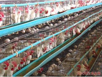 未来十年内 农村养殖业四大发展方向